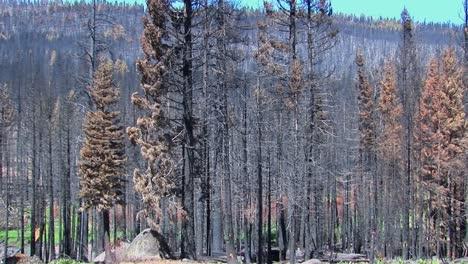 Un-Bosque-Quemado-Por-El-Fuego-Con-árboles-Talados