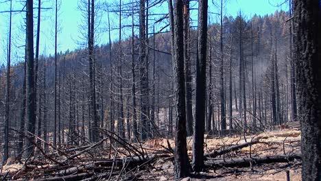 Un-Bosque-Quemado-Por-El-Fuego-Con-árboles-Talados-2