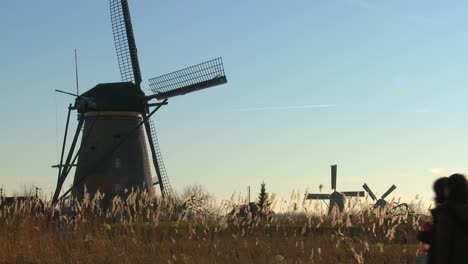 Windmills-stand-in-the-tall-grass-in-Holland