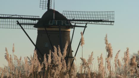 A-windmill-rises-above-tall-grass-in-Holland