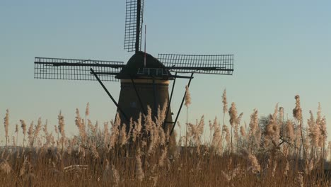 A-windmill-rises-behind-tall-grass-in-Holland