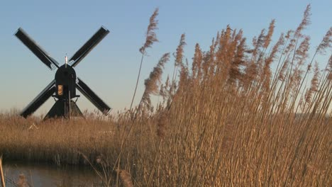 A-windmill-spins-near-high-grasses-in-Holland