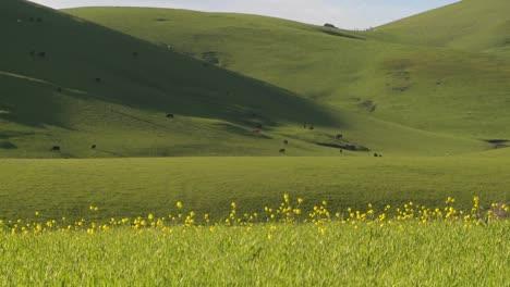 La-Hierba-Verde-Crece-En-Las-Colinas