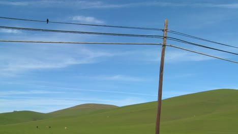 A-beautiful-and-stark-shot-of-a-bird-sitting-on-a-telephone-line-in-front-of-a-green-rolling-landscape
