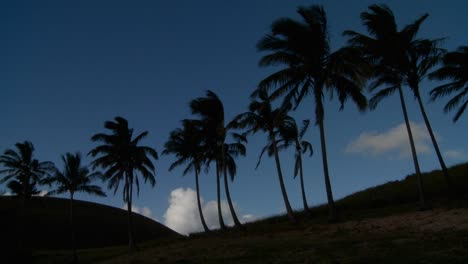 Palm-trees-blow-in-the-wind-on-a-remote-tropical-beach