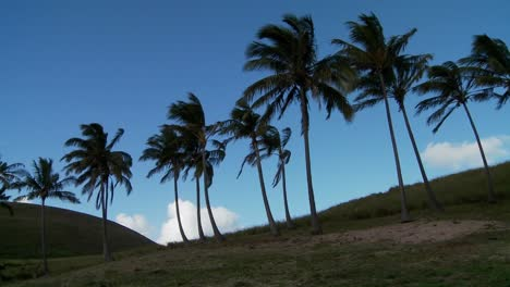 Pan-across-rows-of-palms-blowing-in-the-wind-on-a-South-Sea-island