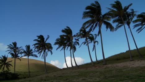 Pan-across-rows-of-palms-blowing-in-the-wind-on-a-South-Sea-island-1