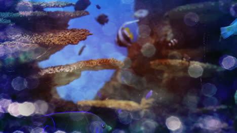 Aquarium-08