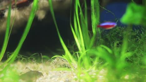 Aquarium-33