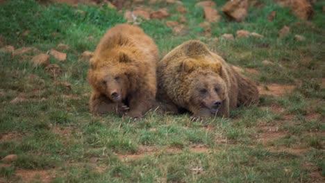 Bear-08