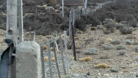 A-lonely-fence-on-the-windswept-plains-of-Patagonia-1