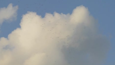 Flocks-of-birds-fly-against-thunderhead-clouds