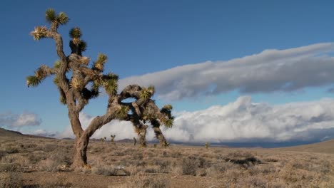 Time-lapse-of-clouds-moving-behind-yucca-trees