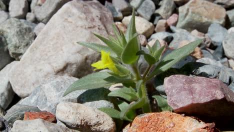 A-small-green-plant-flowers-in-a-barren-hostile-desert