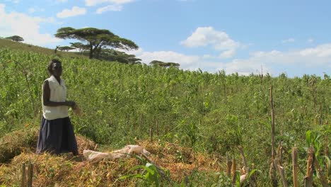 A-woman-works-on-a-farm-in-Africa