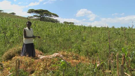 A-woman-works-on-a-farm-in-Africa-1