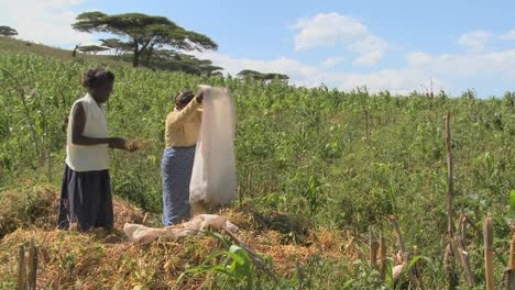 Two-women-work-in-the-fields-on-a-farm-in-Africa