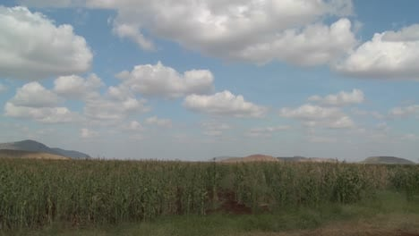 Corn-grows-in-farm-fields-in-Africa-in-this-time-lapse-shot
