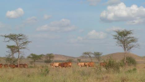 A-Masai-woman-with-a-parasol-walks-under-the-hot-African-sun-in-Kenya-or-Tanzania