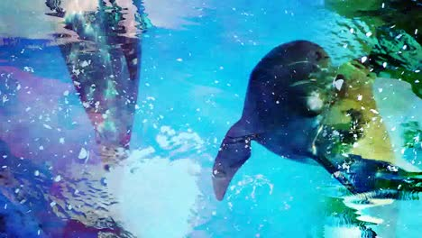 Dolphins-Abstract-03