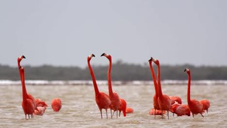 Flamingo-TL-00