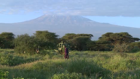 A-Masai-warrior-walks-in-front-of-Mt-Kilimanjaro-in-Tanzania-East-Africa-at-dawn-2