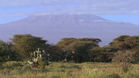 Beautiful-time-lapse-shot-of-Mt-Kilimanjaro-in-Tanzania-East-Africa-at-dawn