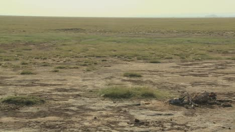 Das-Skelett-Eines-Toten-Tieres-Liegt-In-Der-Wüste-Als-Beispiel-Für-Leben-Und-Tod-In-Ostafrika