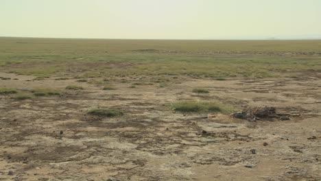 Das-Skelett-Eines-Toten-Tieres-Liegt-In-Der-Wüste-Als-Beispiel-Für-Leben-Und-Tod-In-Ostafrika-2