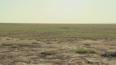 Schwenk-Durch-Ausgedörrte-Wüste-Zum-Skelett-Eines-Toten-Tieres-Liegt-In-Der-Wüste-Als-Beispiel-Für-Leben-Und-Tod-In-Ostafrika