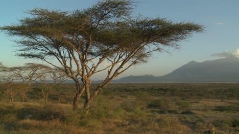 Mt-Meru-in-the-distance-across-the-Tanzania-savannah