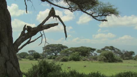 African-baboons-sit-in-a-tree-as-a-family-group-against-the-magnificent-backdrop-of-Amboseli-National-Park-Tanzania