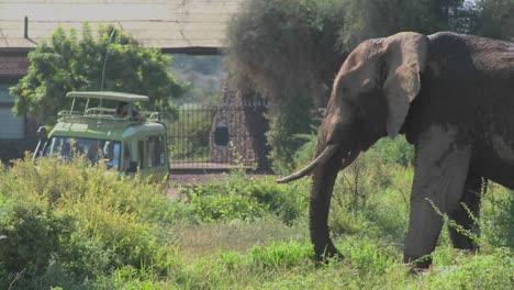 Un-Enorme-Elefante-Africano-Posa-En-La-Puerta-De-Entrada-Al-Parque-Nacional-Amboceli-En-Tanzania