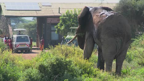 A-massive-African-elephant-poses-at-the-entrance-gate-to-Amboceli-National-Park-in-Tanzania-1