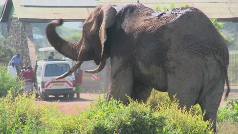 A-massive-African-elephant-poses-at-the-entrance-gate-to-Amboceli-National-Park-in-Tanzania-2