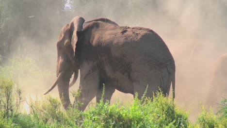 A-giant-African-elephant-gives-himself-a-dustbath-in-this-remarkable-shot-1