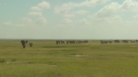 A-large-herd-of-African-elephants-migrate-across-Amboceli-National-Park-in-Tanzania