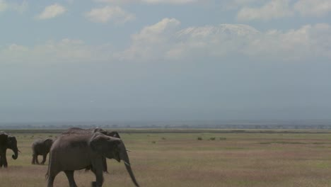 A-large-herd-of-African-elephants-migrate-across-Amboceli-National-Park-in-Tanzania-3