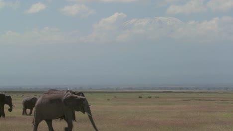 Una-Gran-Manada-De-Elefantes-Africanos-Migran-Por-El-Parque-Nacional-Amboceli-En-Tanzania-3