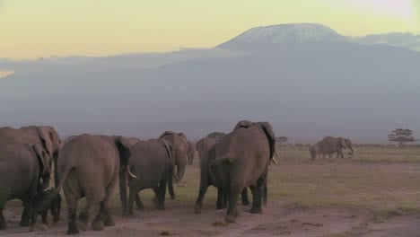 A-large-herd-of-African-elephants-migrate-across-Amboceli-National-Park-in-Tanzania-4