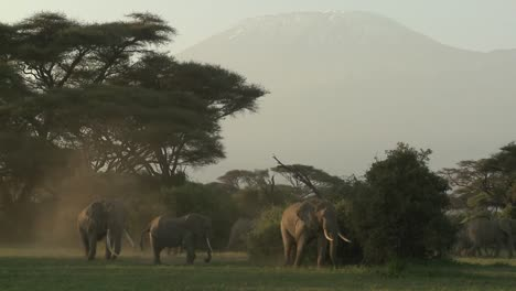 Large-herds-of-African-elephants-migrate-near-Mt-Kilimanjaro-in-Amboceli-National-Park-Tanzania