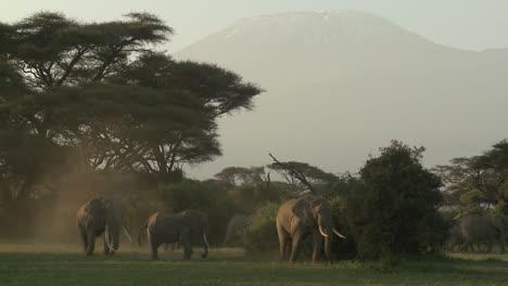 Grandes-Manadas-De-Elefantes-Africanos-Migran-Cerca-Del-Monte-Kilimanjaro-En-El-Parque-Nacional-Amboceli-Tanzania