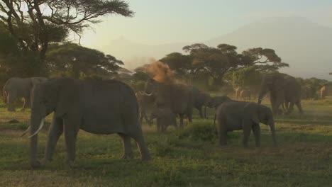 Grandes-Manadas-De-Elefantes-Africanos-Migran-Cerca-Del-Monte-Kilimanjaro-En-El-Parque-Nacional-Amboceli-Tanzania-2