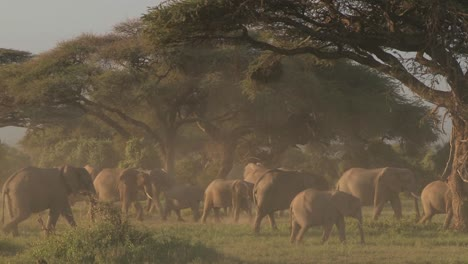 Large-herds-of-African-elephants-migrate-near-Mt-Kilimanjaro-in-Amboceli-National-Park-Tanzania-3
