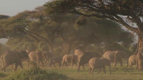 Grandes-Manadas-De-Elefantes-Africanos-Migran-Cerca-Del-Monte-Kilimanjaro-En-El-Parque-Nacional-Amboceli-Tanzania-3