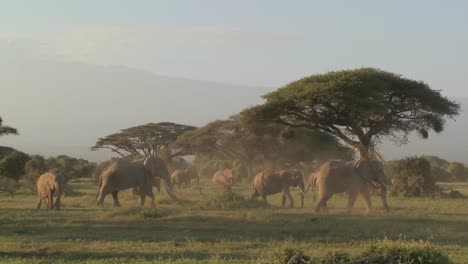 Large-herds-of-African-elephants-migrate-near-Mt-Kilimanjaro-in-Amboceli-National-Park-Tanzania-4