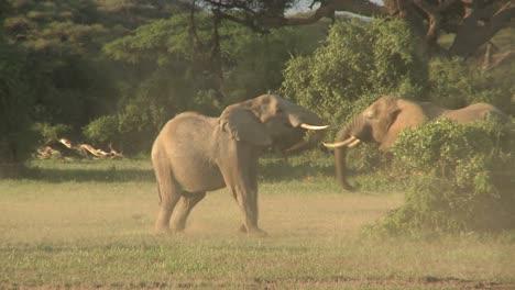Los-Elefantes-Luchan-Entre-Sí-En-Las-Llanuras-De-áfrica-2