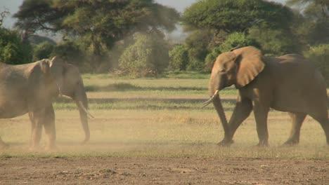 Los-Elefantes-Luchan-Entre-Sí-En-Las-Llanuras-De-áfrica-3