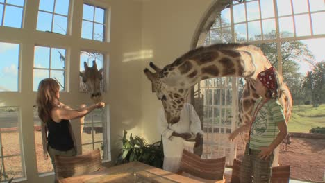 Giraffes-stick-their-heads-into-the-windows-of-an-old-mansion-in-Africa-and-eat-off-the-dining-room-table-4