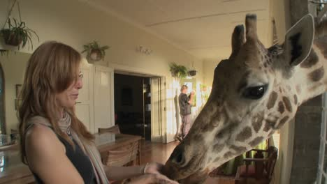 Giraffes-stick-their-heads-into-the-windows-of-an-old-mansion-in-Africa-and-eat-off-the-dining-room-table-7
